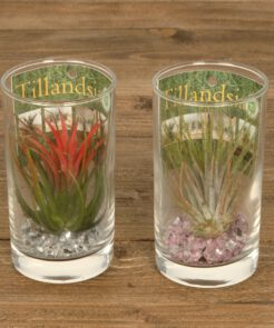 Tillandsia long drink glas