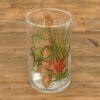 Tillandsia im Glas (cylinder medium)
