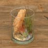 Tillandsia in glas cilinder (small)