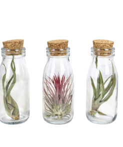 Air plant arrangementen