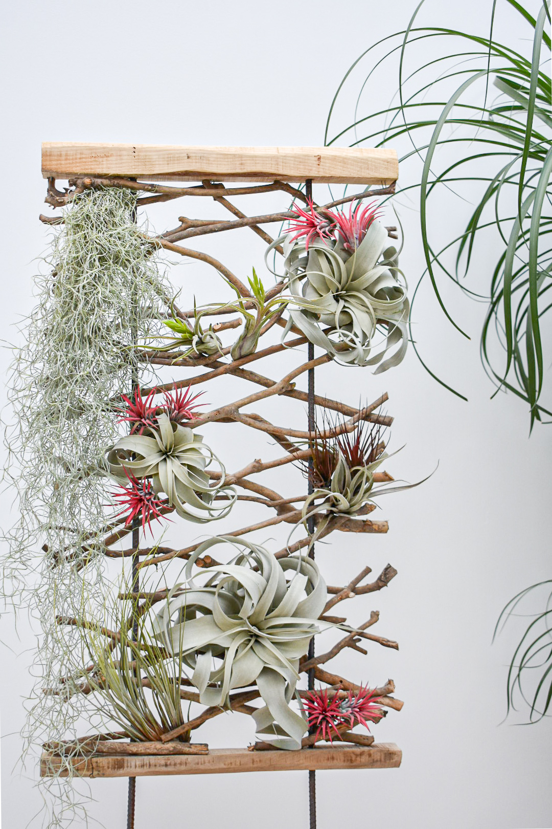 Tillandsia creation by Corsa Plant