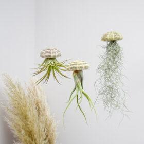 Plantasy